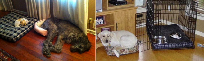 Dogs and Beds